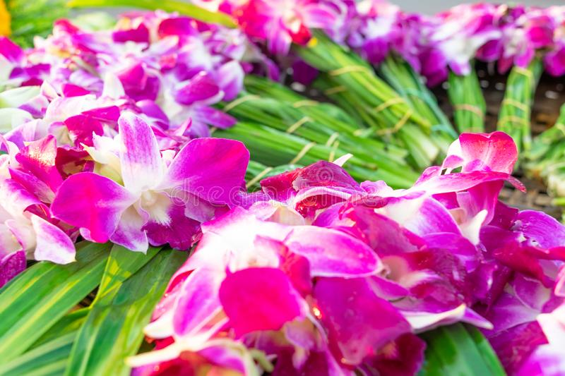 The orchids that are prepared on the wicker. For texture backgrounds royalty free stock photos