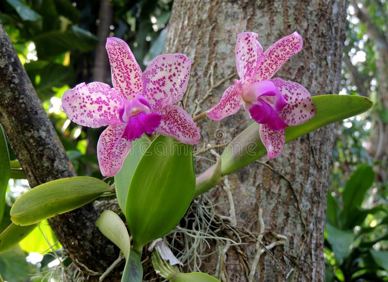 Orchids. These rare orchids bloomed just before the hurricane. sadly they didn`t survive the storm royalty free stock photos