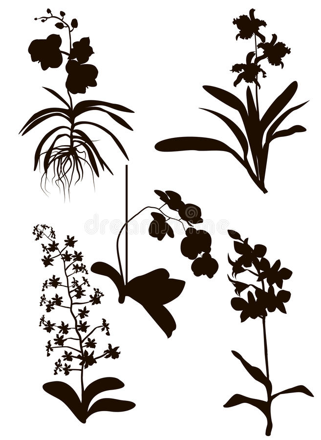 Orchids Silhouette royalty free illustration