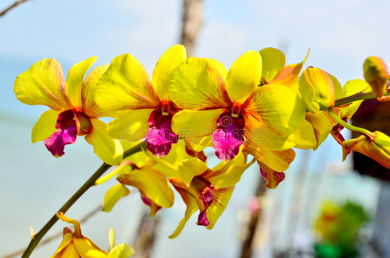 Orchids and a sky background. Orchids and a blue sky background stock images