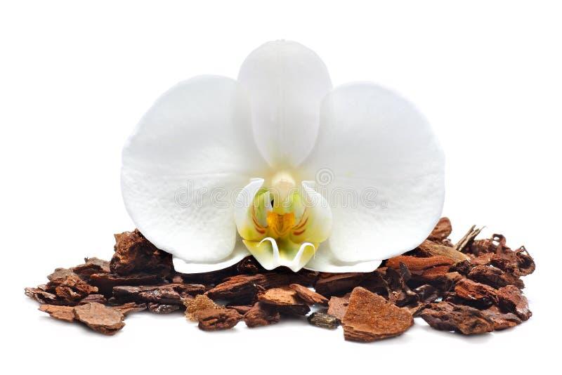 Orchids smutsar med vitorchidblomman royaltyfri bild