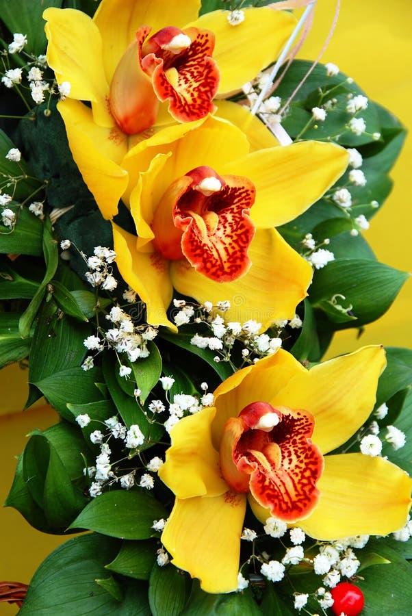 orchidsyellow royaltyfri foto