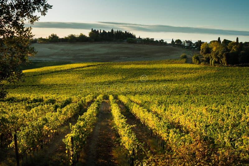 ` ORCIA, TUSCANY/ITALY - vignoble de VAL D en ` Orcia de Val d images stock