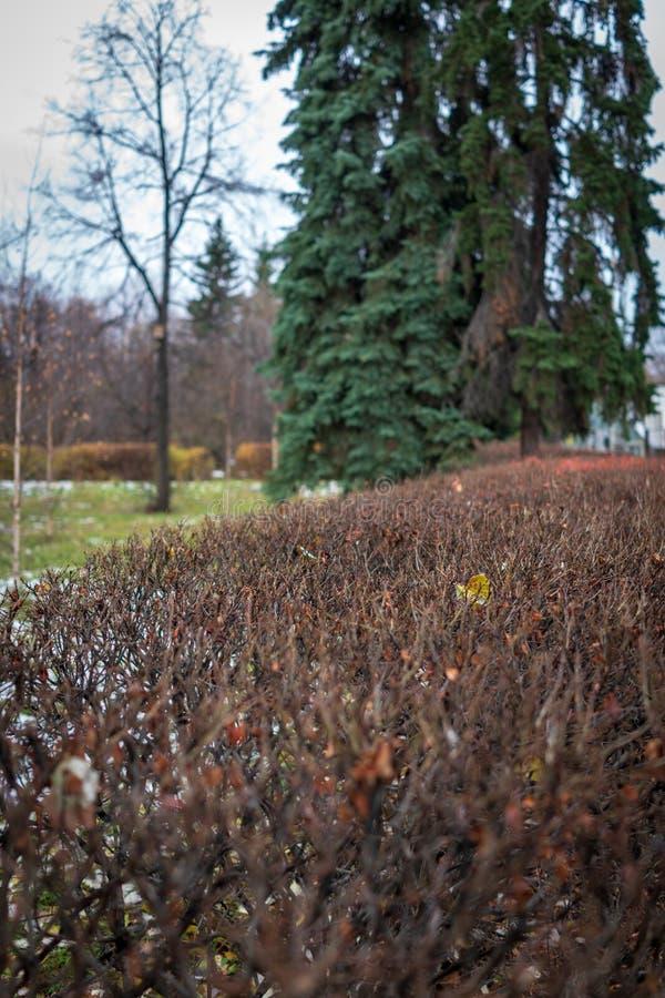 In orde gemaakte struiken in het de herfstpark stock foto