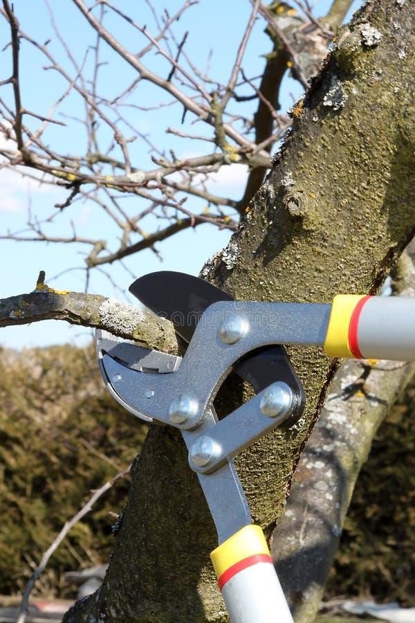 In orde makende Bomen stock afbeelding
