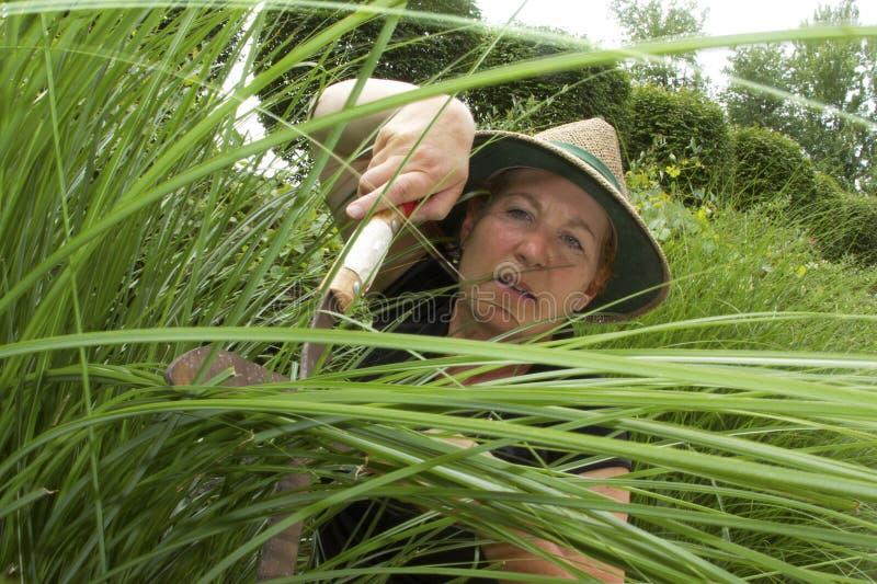 In orde makende Grassen stock afbeelding