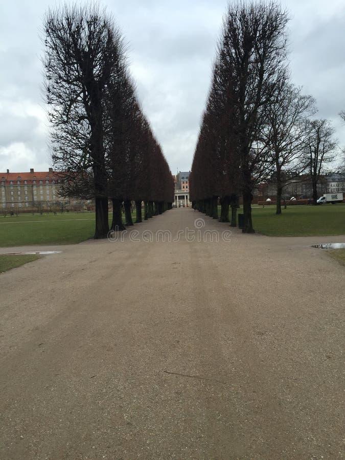 Ordelijke bomen royalty-vrije stock foto's