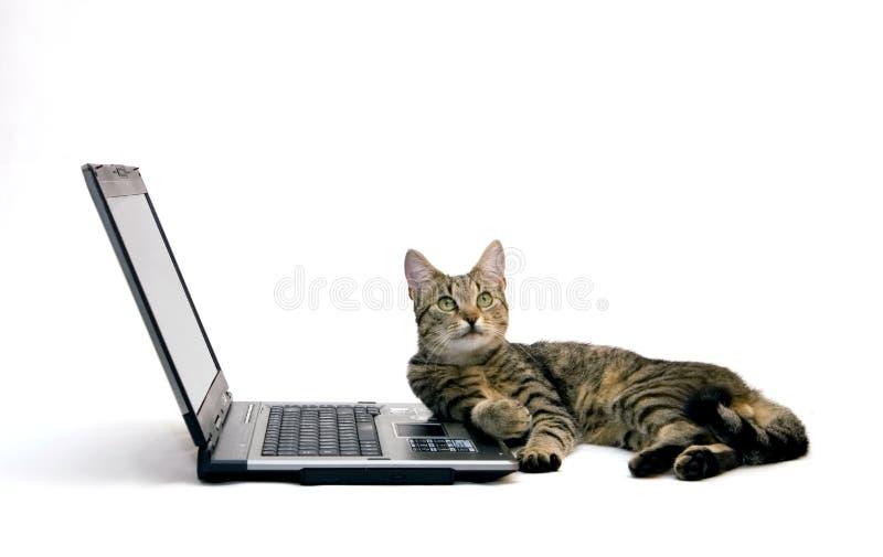 ORDENADOR PORTÁTIL y gato imagen de archivo libre de regalías