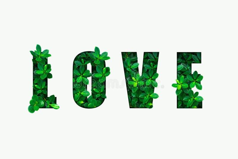 OrdFÖRÄLSKELSE från gröna sidor royaltyfri illustrationer