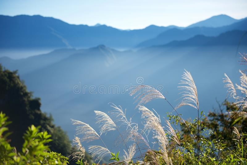Morning and sunlight. In an ordinary morning, the sunlight fills the entire hill, Alishan, Taiwan, China royalty free stock image