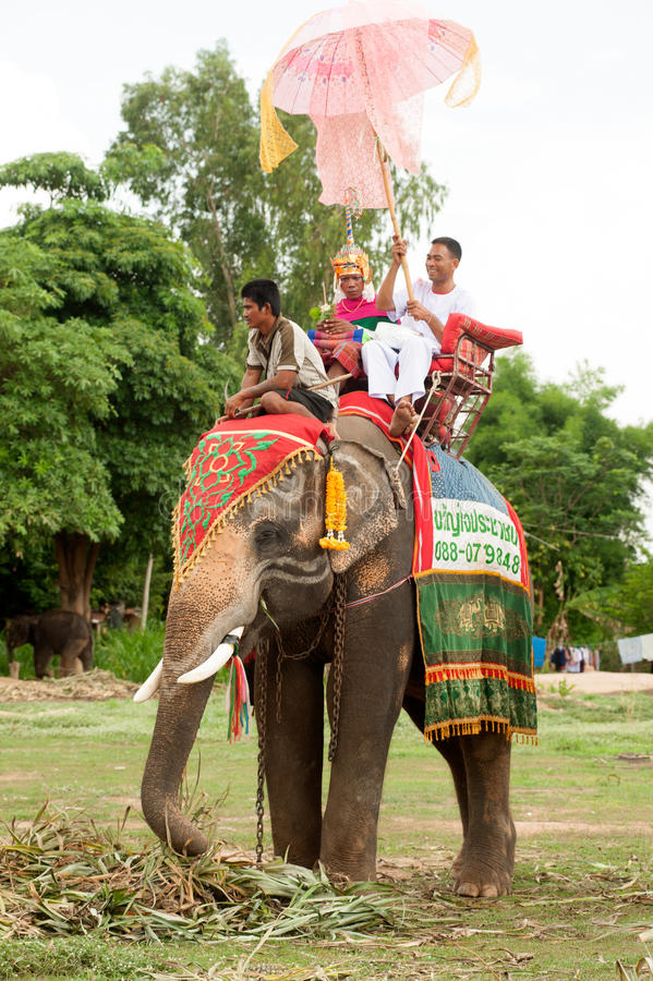 Ordination parade on elephant's back Festival. SURIN,THAILAND-MAY 23 : Ordination Parade on ElephantâEUR(TM)s Back Festival is when elephants parade and carry stock images
