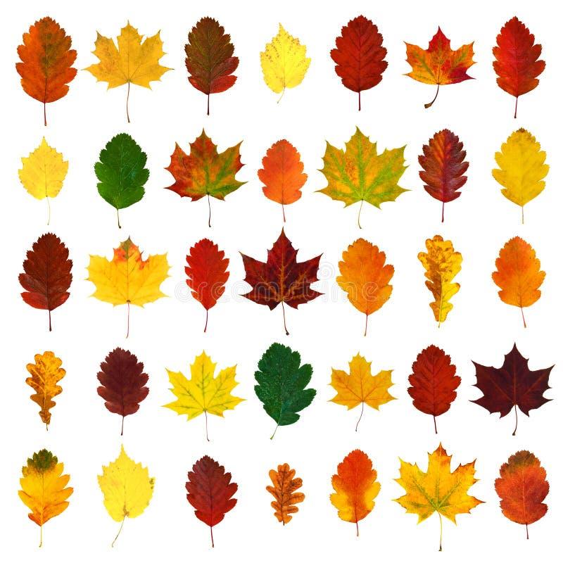 Ordnat färgrikt gult, rött, apelsin, grön hagtorn, lönn, eknedgångsidor arkivbilder