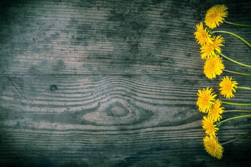 Ordning av maskrosor på mörk träbakgrund arkivbild