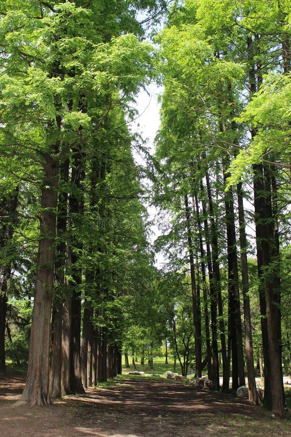 Ordningsamma träd royaltyfria foton