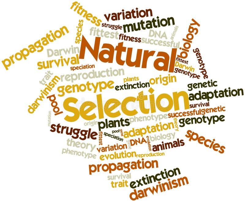 Ordoklarhet för naturligt val stock illustrationer