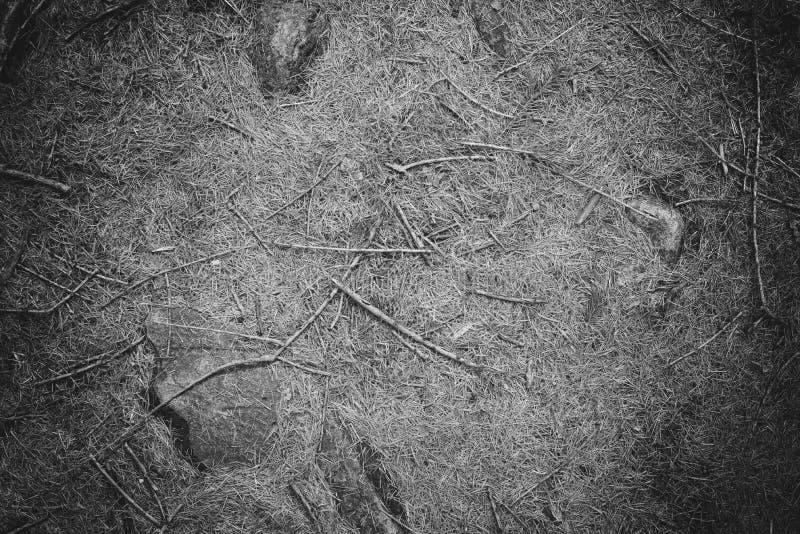 Ordures de feuille sur le plancher de forêt, noir et blanc photo stock