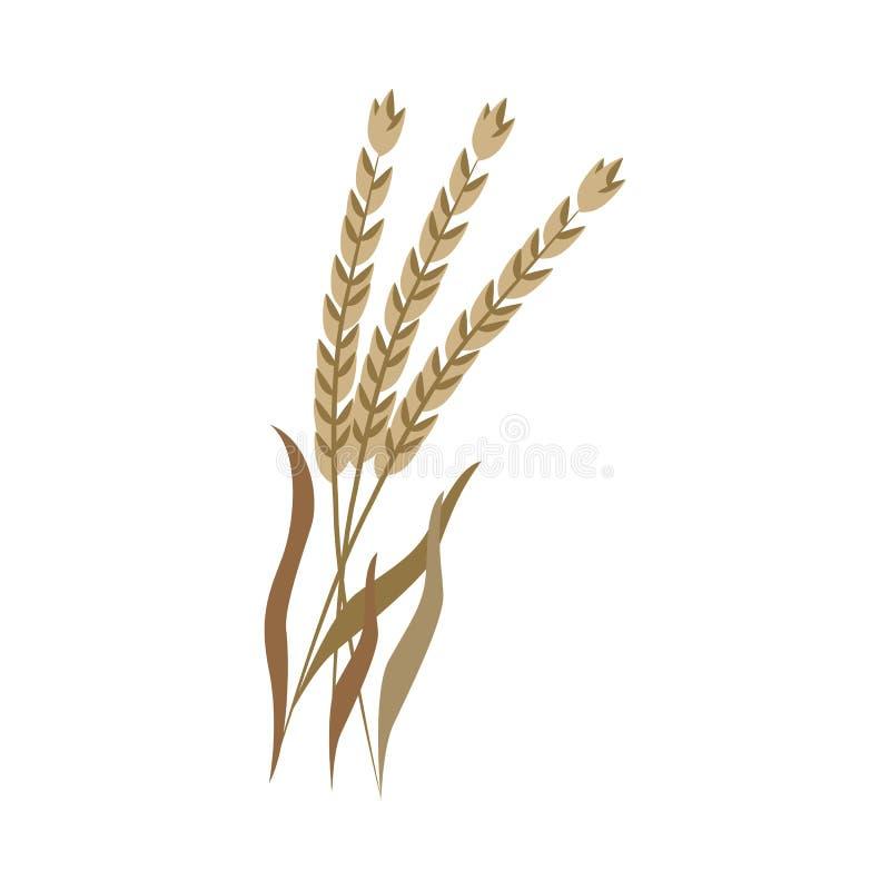 Orecchie asciutte mature dell'compitato di sul gambo nello stile piano illustrazione di stock