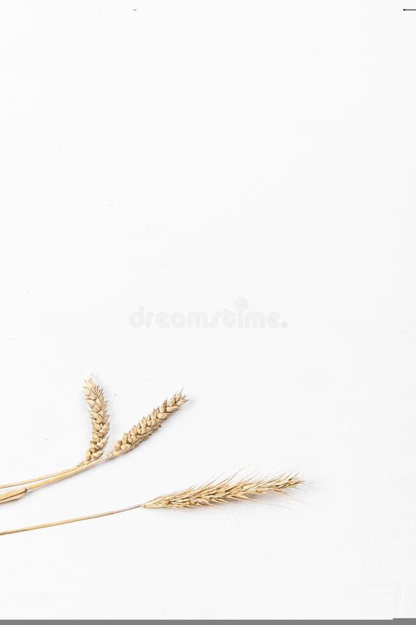 Orecchie del cereale su un fondo bianco Orecchie della segale e del grano Vista da sopra fotografie stock libere da diritti