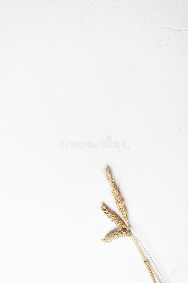 Orecchie del cereale su un fondo bianco Orecchie della segale e del grano Vista da sopra immagini stock libere da diritti