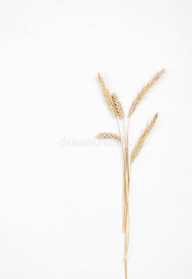 Orecchie del cereale su un fondo bianco Orecchie della segale e del grano Vista da sopra fotografie stock
