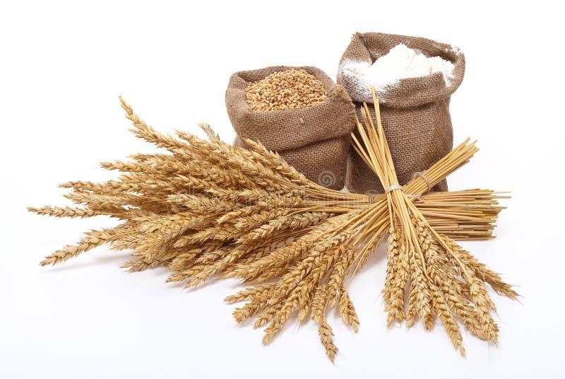 Orecchie del frumento e della farina fotografia stock libera da diritti