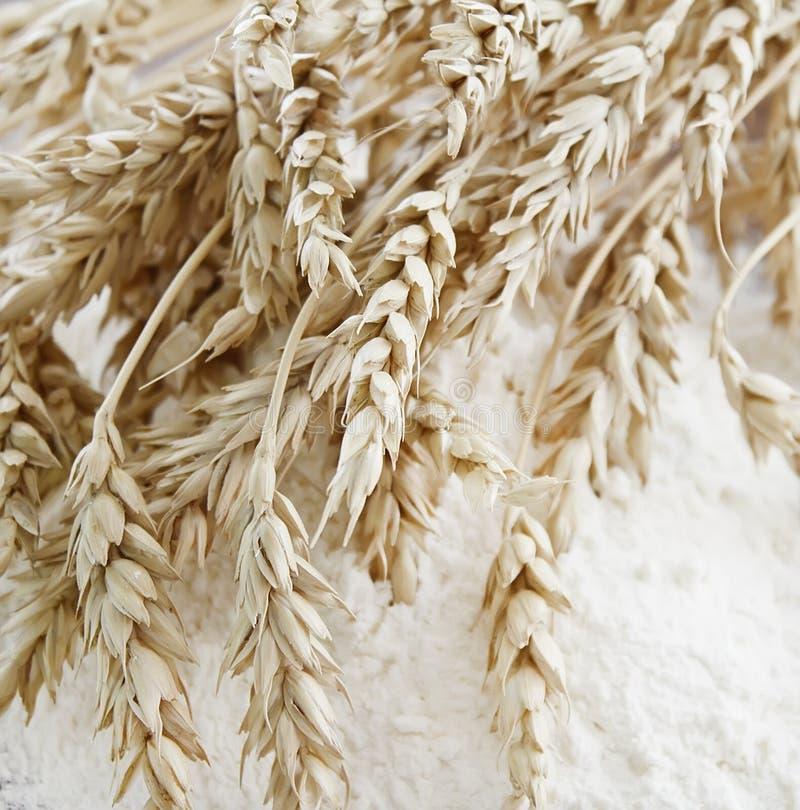 Orecchie del frumento sulla farina immagini stock libere da diritti