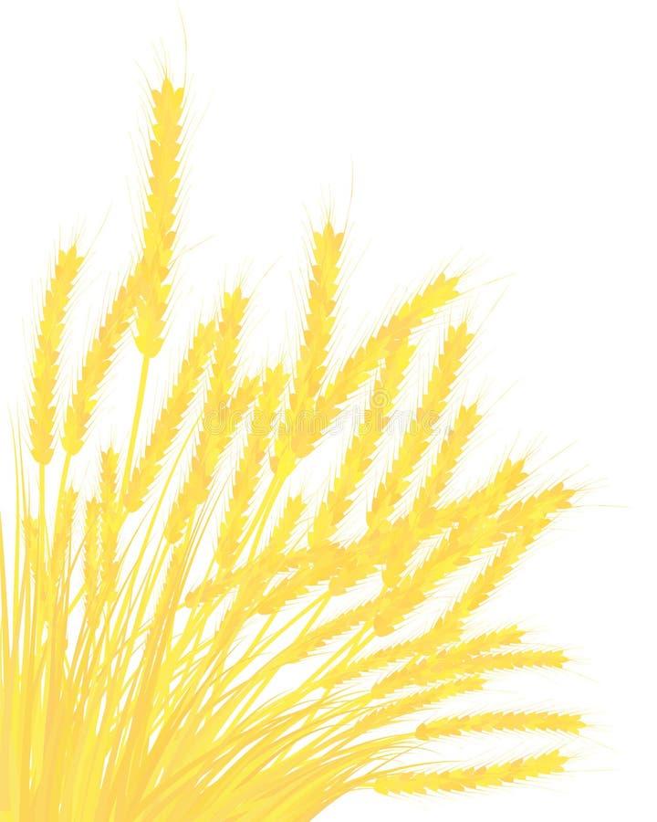 Orecchie di frumento illustrazione di stock