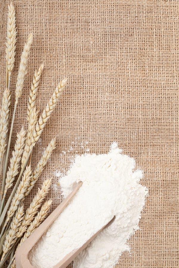 Orecchie e farina del frumento fotografia stock