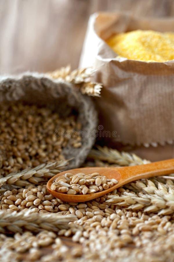 Orecchie e granuli del frumento fotografia stock libera da diritti