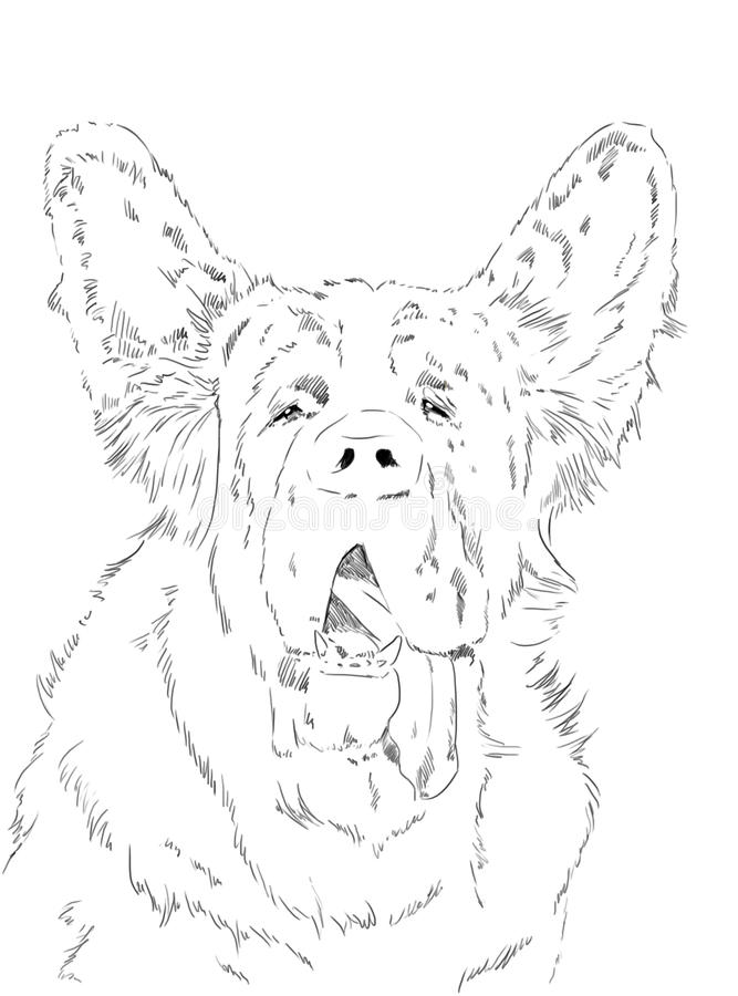 Orecchie sveglie del cane sant di bernard illustrazione vettoriale