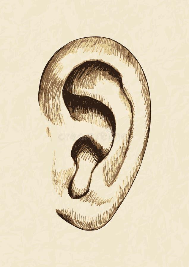 orecchio illustrazione di stock