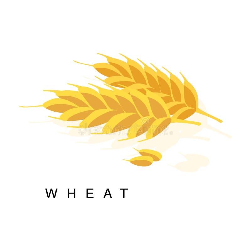 Orecchio del grano, illustrazione di Infographic con la pianta coltivata realistica del cereale ed il suo nome illustrazione di stock