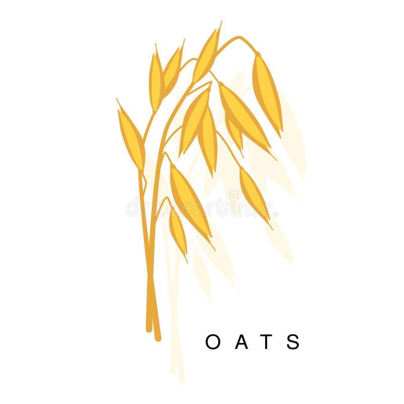 Orecchio dell'avena, illustrazione di Infographic con la pianta coltivata realistica del cereale ed il suo Namer illustrazione di stock