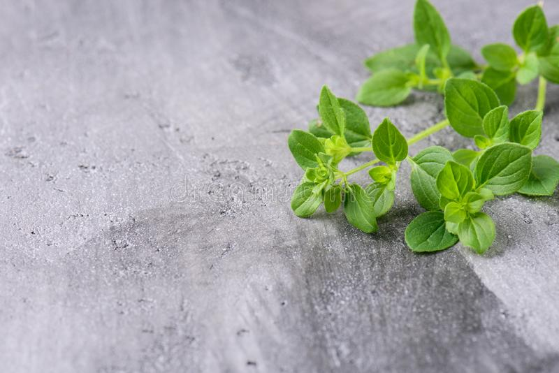 Oregano branches on a gray concrete background royalty free stock image
