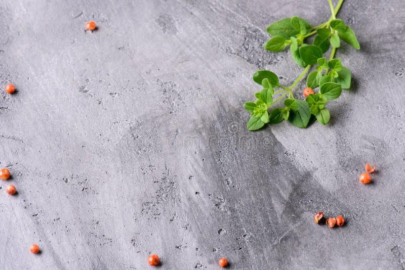 Oregano branches on a gray concrete background royalty free stock photo