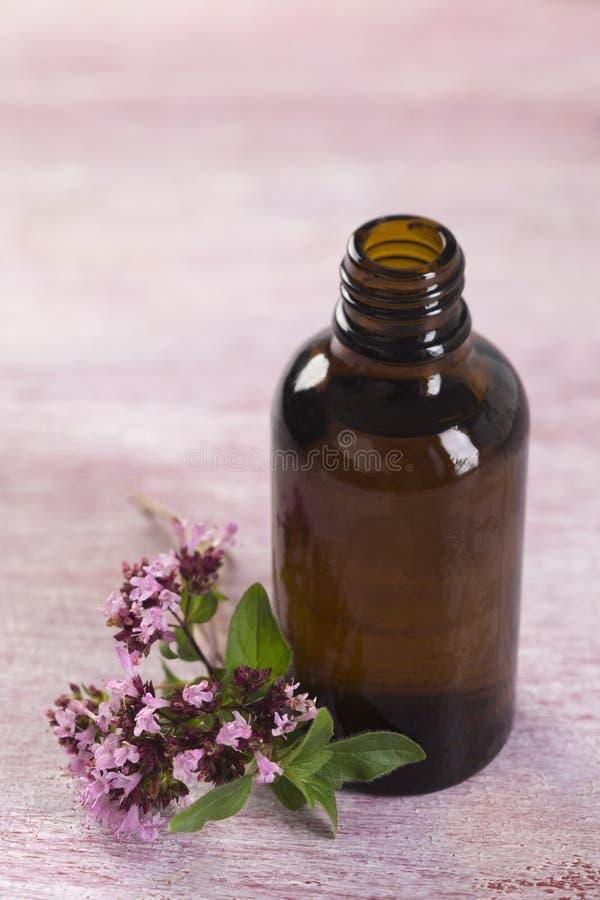 Oregano essential oil royalty free stock image