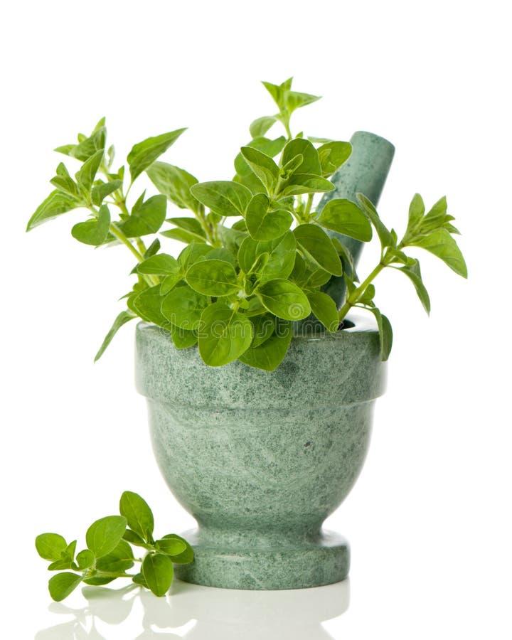 Download Oregano Herbs stock image. Image of culinary, ceramic - 18929555