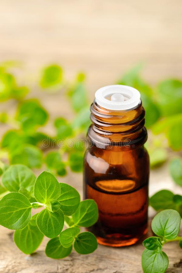 Oregano oil and fresh oregano leaves on the wooden table royalty free stock photos