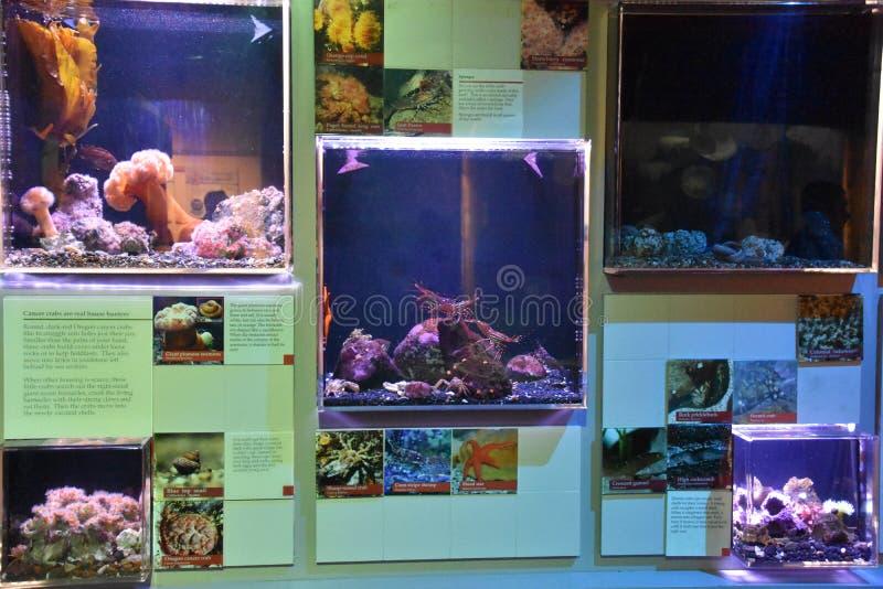 Oregon Coast Aquarium In Newport, Oregon Editorial Photo ...