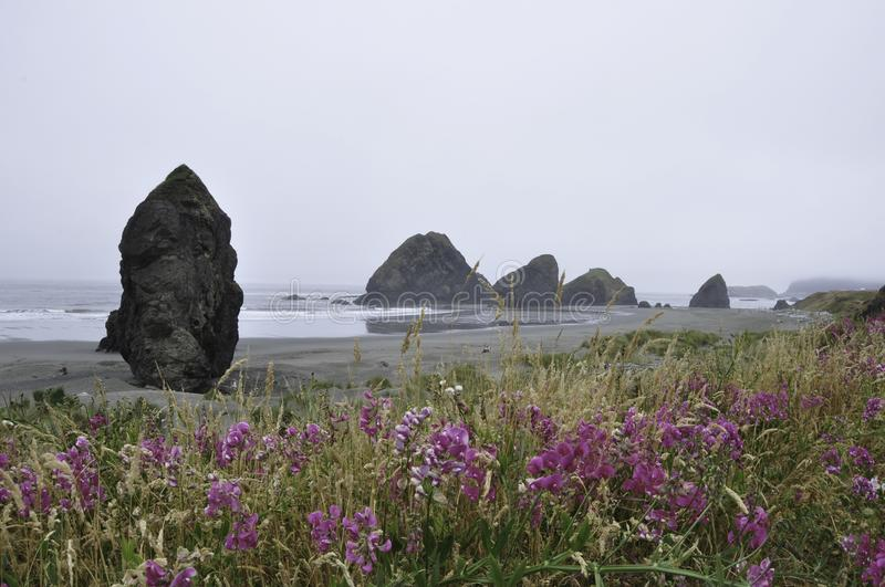 Oregon coast with wildflowers stock image