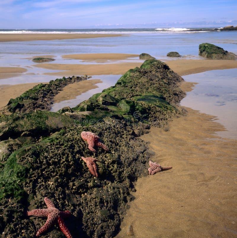 Download Oregon Coast And Shoreline Stock Photos - Image: 23171283