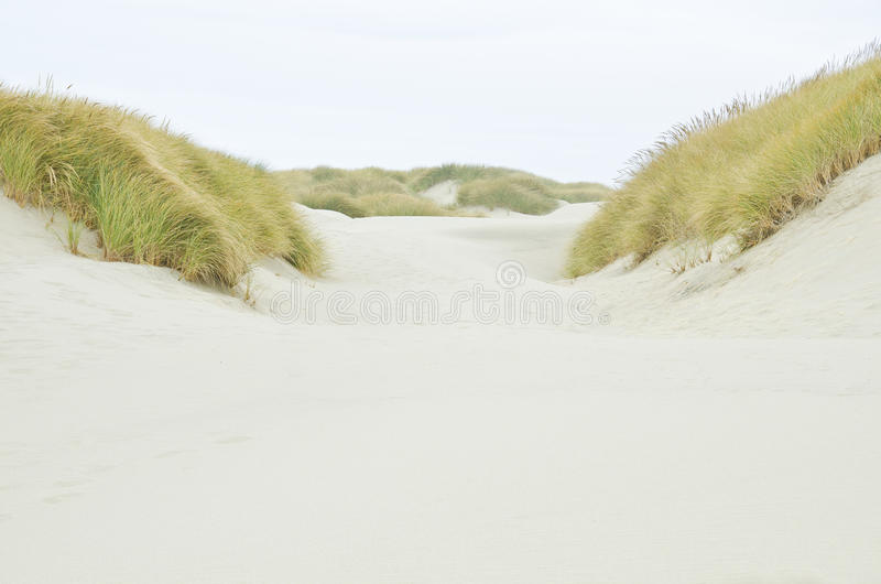 Oregon Coastal Sand Dunes stock images