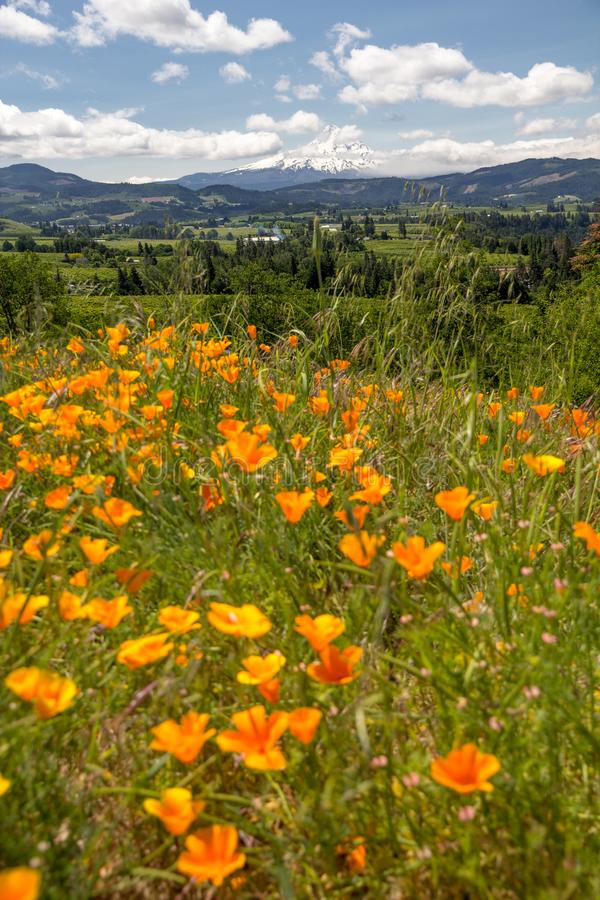 Oregon farmland sandwiched between blurred poppies and Mount Hood, Oregon royalty free stock photo