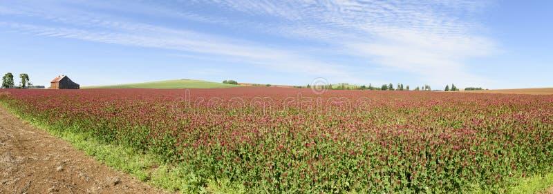 Oregon Grown Crimson Clover, Willamette Valley, Marion County. Oregon Grown Crimson Clover, Mid-Willamette Valley royalty free stock photo