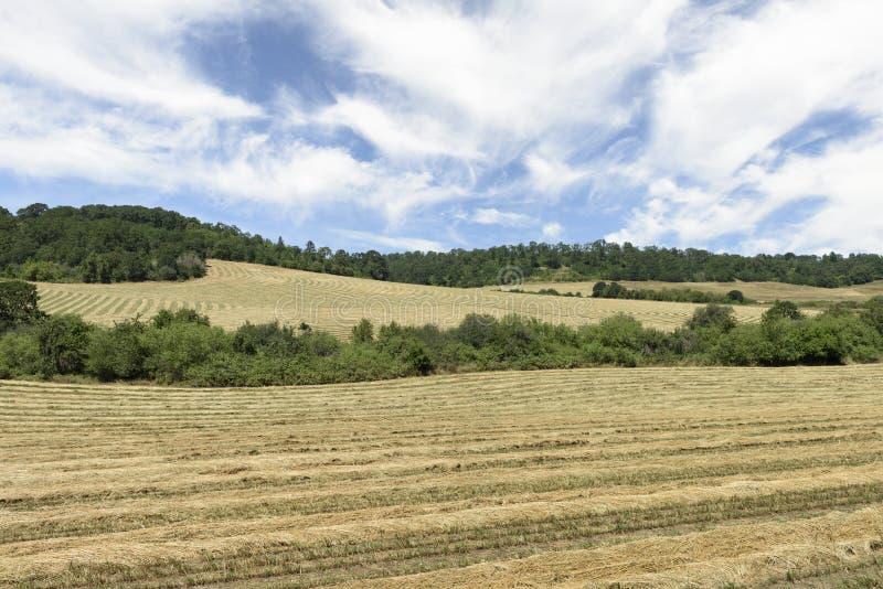 Oregon Grown Ryegrass Harvest in the Willamette Valley, Marion County. Rye Grass Harvest in the Mid-Willamette Valley stock photos