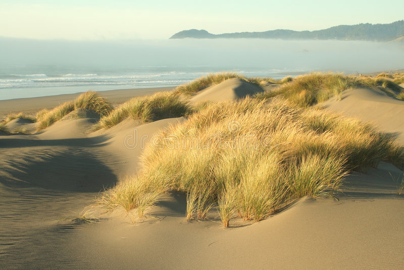 Oregon-Küsteportraits lizenzfreie stockbilder