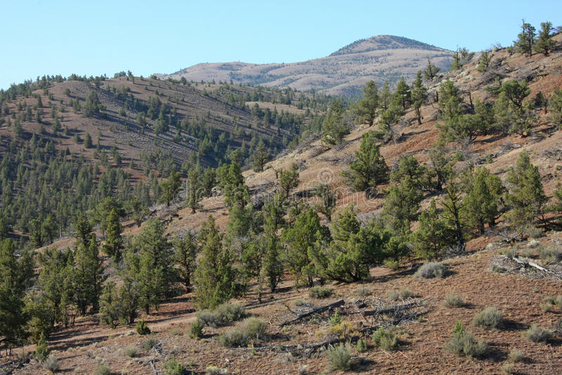 Oregon Landscape royalty free stock photos