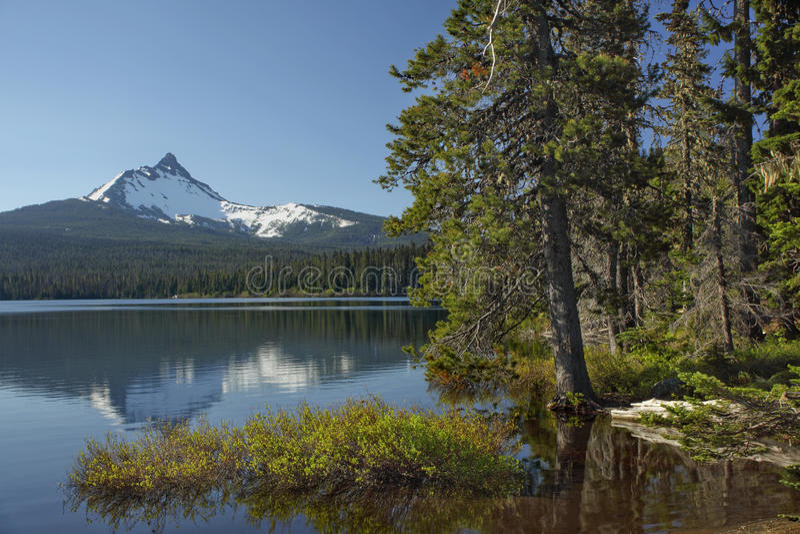 Download Oregon portrait stock image. Image of trees, wilderness - 22092199