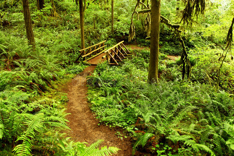 Download Oregon portrait stock image. Image of path, hiking, trees - 25651765