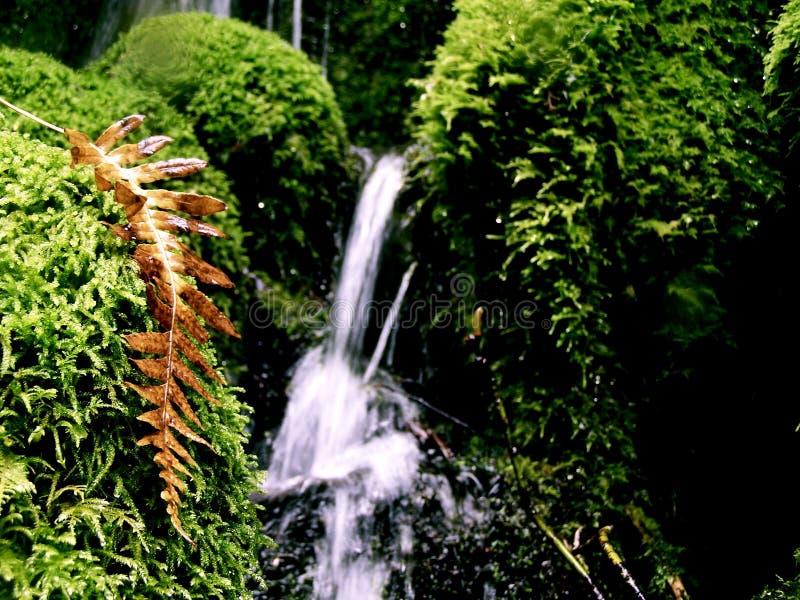 Oregon vattenfall med den närliggande nedgångormbunken royaltyfria bilder